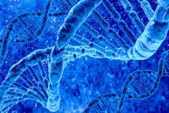 SmartDNA test