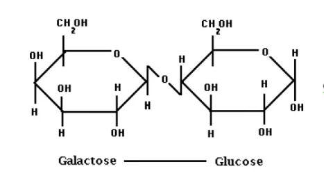 Lactose disaccharide